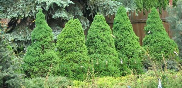 Садовые растения каталог которых