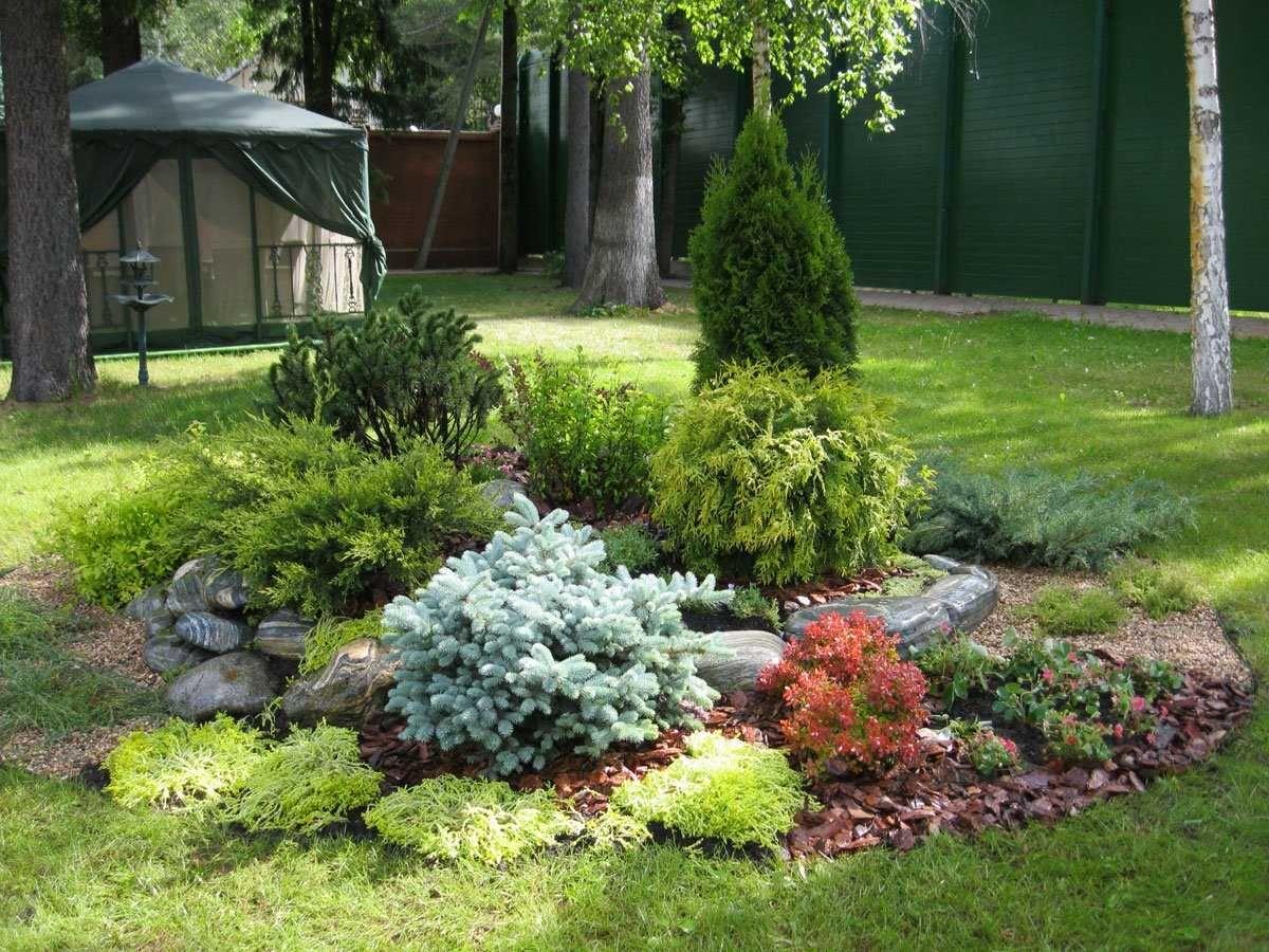 Клумба из хвойных растений схема и фото